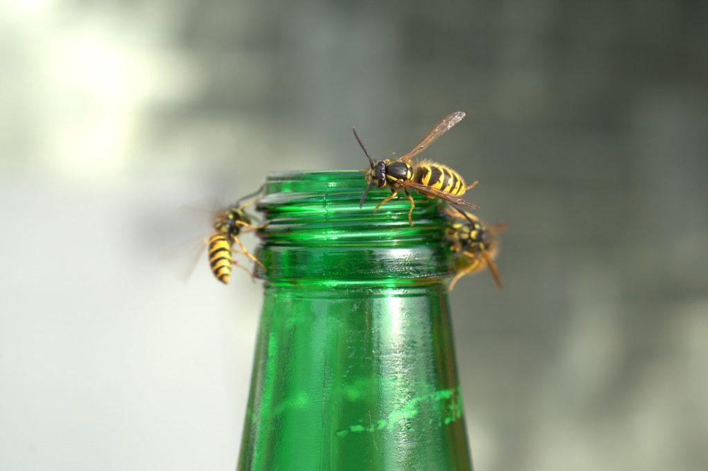 Mehr als 1.000 Österreicher jährlich nach Insektenstichen im Spital